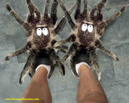 spiderslippers